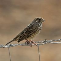 Birding Southern Spain - 2015