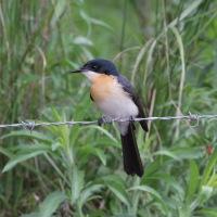 Local birding, adverse weather