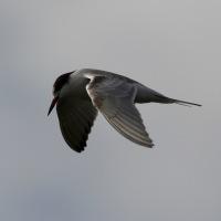Cornish Cornucopia