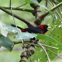 Costa Rica - 1st stop, Sarapiqui