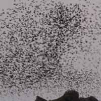 FNQ - Far North Queensland birding