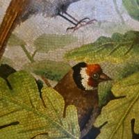 Birds of Italy